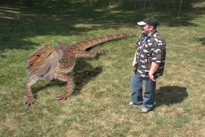 Largest reptile ever