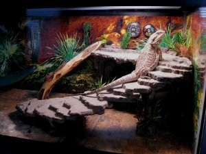 photo bearded dragon terrarium decor