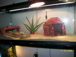 Bearded Dragon set up