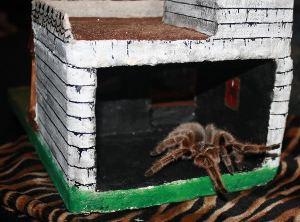 Haunted house tarantula