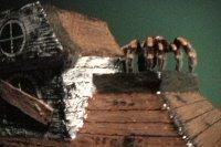 Tarantula hide-haunted house