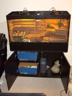 Leopard gecko cages