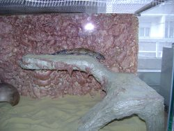 Leopard gecko cage