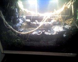 water dragon habitat