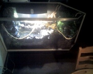 water dragon cage