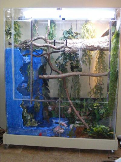 chinese water dragon cage